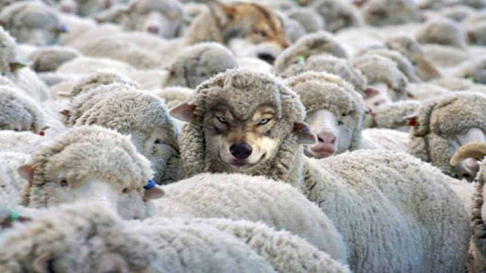 how-to-detect-a-wolf-in-sheeps-clothing-001